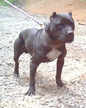 Wildside Kennels Dogs For Sale
