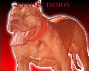 ONLINE PEDIGREES :: [152470] :: SANTOS' THE RED DEMON