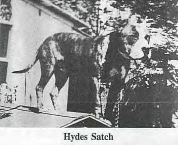 ONLINE PEDIGREES :: [1858] :: HYDE'S SATCH (CARVER'S)
