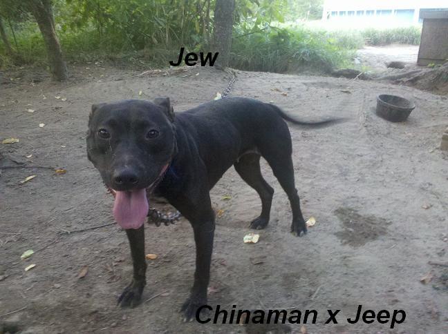 Jeep bloodline dogs