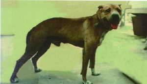 The History     indian Sonny's/carver's Bolio Rom | Game Dog Forum