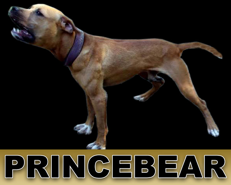 ONLINE PEDIGREES :: [475731] :: TITAN KENNELS PRINCE