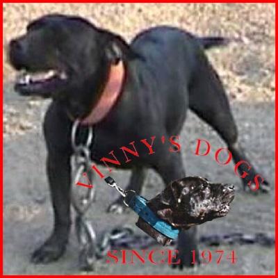 ONLINE PEDIGREES :: [544210] :: VINNY'S DOGS PANTERITA