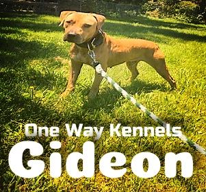ONLINE PEDIGREES :: [565048] :: <FONT COLOR = BLUE>ONEWAYKENNEL GIDEON