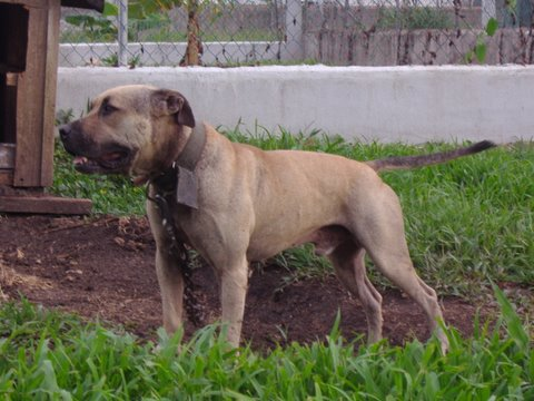 Pedigree Database: BELIZEAN BOYS' (WILDSIDE) DYNAMITE